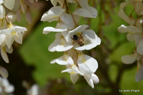 mésanges,escargots,ros. de banks,abeilles,Monpazier,Banes,Forêt 132.JPG