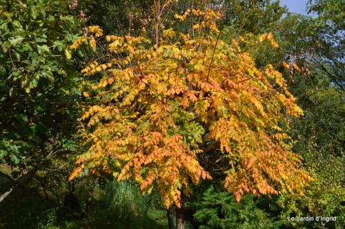 automne,arbres,inondation 087.JPG