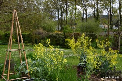 tillandsia,rainette,terreau,jardin 073.JPG