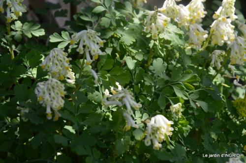 geais,jardin,printemps 096.JPG