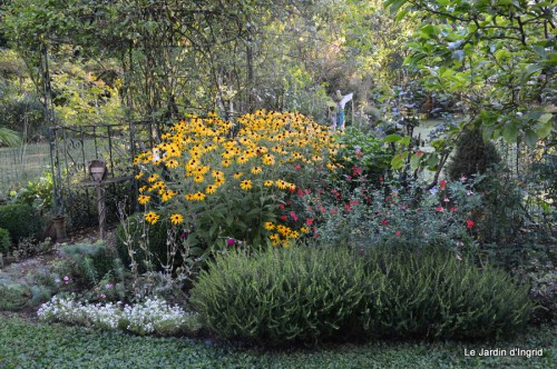 jardin,puces Lasmonzie,asters 006.JPG