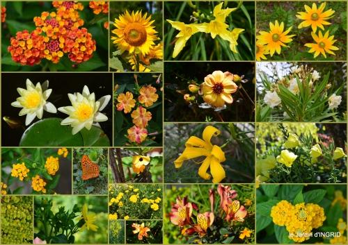 2016-07-04 hémérocalles,cygnes,dahlias,feu d'artifice,jardin,jardinières - Copie2.jpg