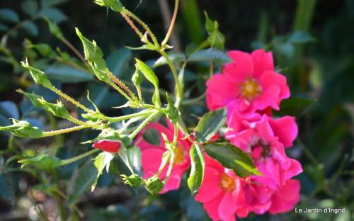 jardin début d'automne ,Sophie,rouge 074.JPG