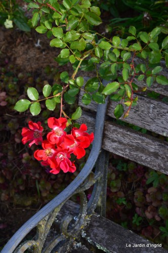 jardin le matin,la mare 063.JPG
