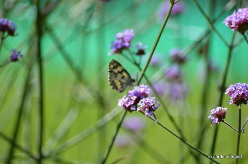 coeur des fleurs,papillons,libellules 163.JPG