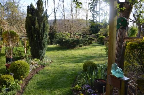 avant tonte,après,euphorbes,tulipes botaniques,autres 058.JPG