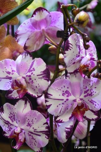 Orchidées,Noel jardiland,lever du soleil 041.JPG