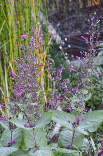 mon coin,Monique,les oies,mon jardin 053.JPG