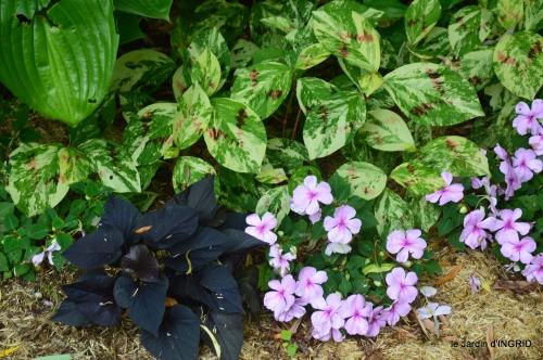 jardin,chez Bernadette,puces,cygnes,pluie 159.JPG