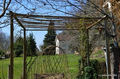 roseaux,narcisses,Nikky,semis,jardin 024.JPG