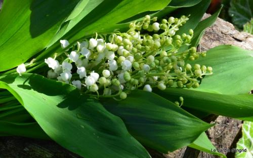 mésanges,escargots,ros. de banks,abeilles,Monpazier,Banes,Forêt 113.JPG