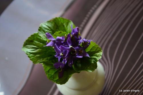 bouquet mamy,jacinthes,semis,jardin 005.JPG