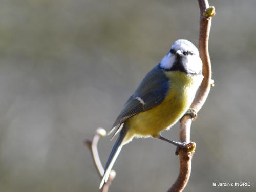 oiseaux,grotte du coulobre 080.JPG