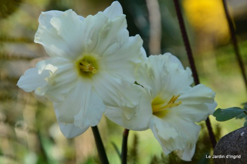 araignée,vues jardin,cygnes,insecte 063.JPG