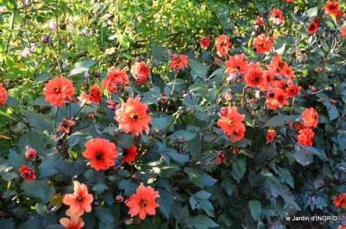jardin Mme Perichou,grandes fleurs,bouquet,jardin 123.JPG