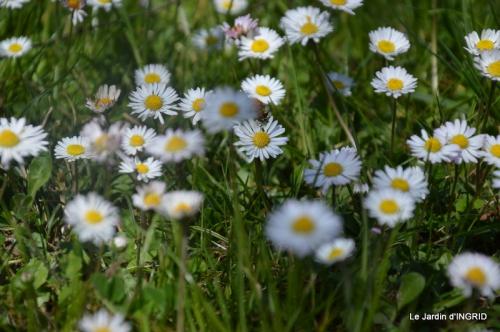 jardin printemps 003.JPG