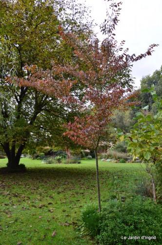 automne,arbres,inondation 008.JPG