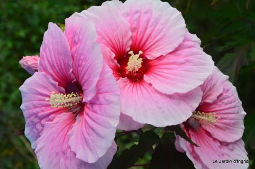 jardin,les filles,fleurs Peyrichou 008.JPG