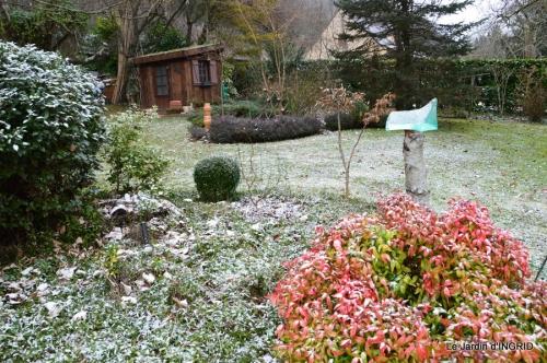 oiseaux première neige 048.JPG