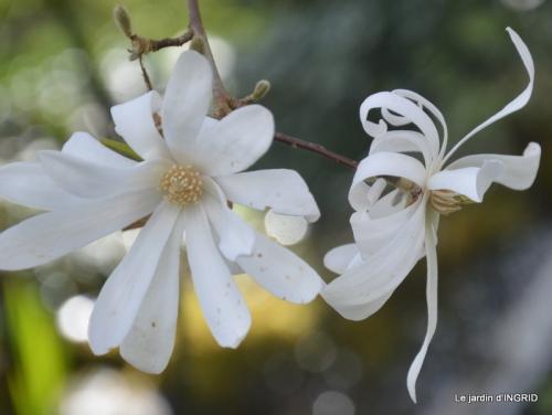 Romane,arbre de Paques,chez Bernadette,jardin 027.JPG