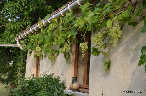 jardin,fruits,Caro,papillons,manthe religieuse,Lalinde 017.JPG