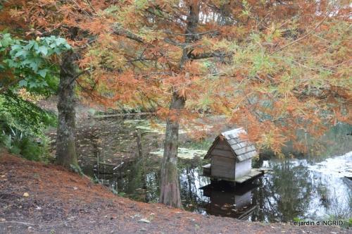 la Sedelle,étang de Riault,cyclamens 045.JPG