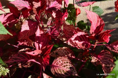 jardin ,bouquet 010.JPG