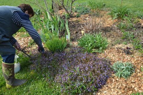 Beaumont,tulipes,primevères et autres,chez Bernadette 138.JPG