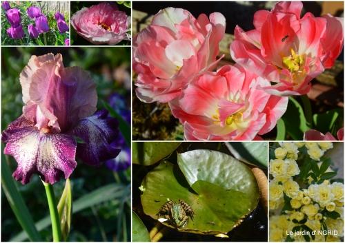 2017-05-06 Julie,Lalinde,Cygnes,Roses,Osier à Monbazillac1.jpg