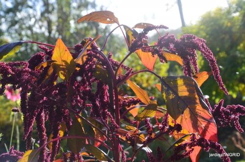 couleurs d'automne,bouquet,lune 142.JPG