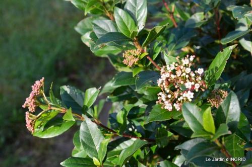 Grues et plantes à Ciron 045.JPG