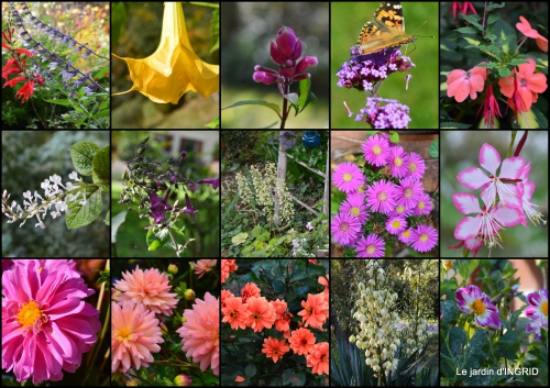 2015-10-05 jardin ,chez Fabien,automne1.jpg