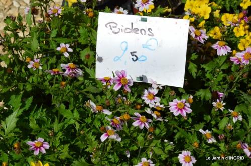 Cadouin,ancolies,roses,pollen,osier,photos Fabien,coquelicots 033.JPG