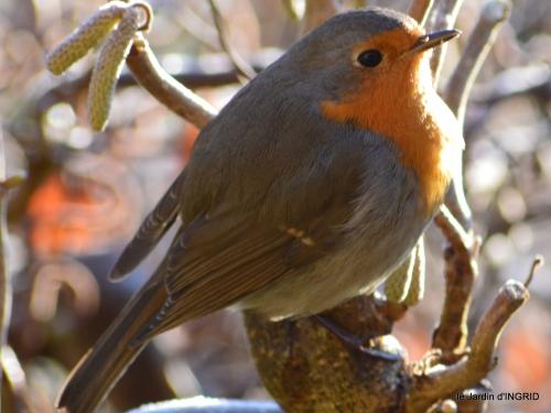 jardin givré,oiseaux 050.JPG