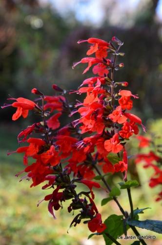 jardin, feuilles,sauges,gloriette,land art 089.JPG