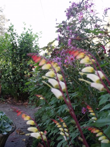 les Essards,concours terre neuve,jardin, 060.JPG