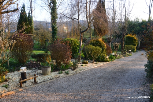 paillage,primevères,jonquilles,jardin 078.JPG