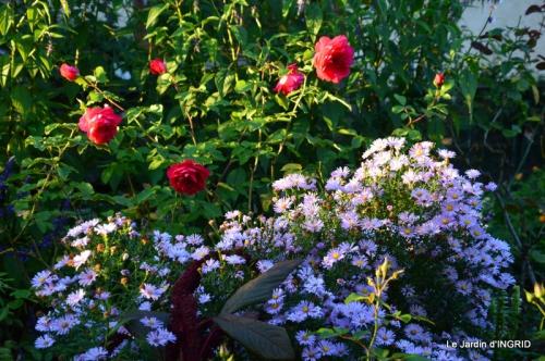jardin Mme Perichou,grandes fleurs,bouquet,jardin 055.JPG