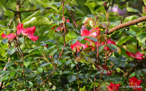 jardin,roses,cabane 138.JPG