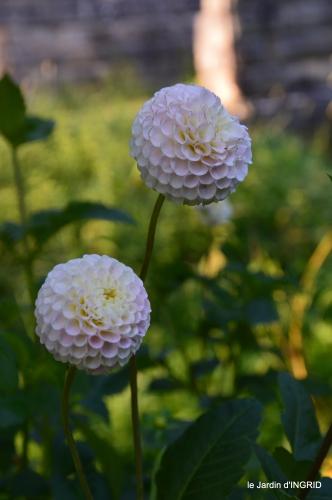 Fleurettes,Dordogne,jardin 169.JPG