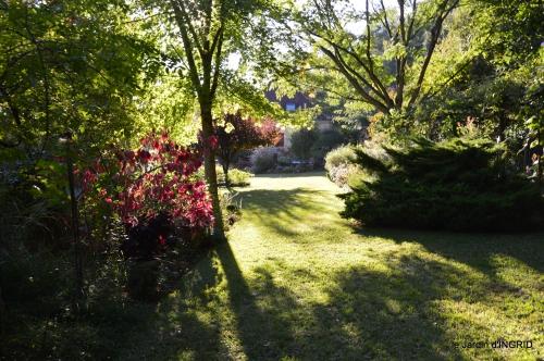 cygnes,jardin,apres la tonte 078.JPG