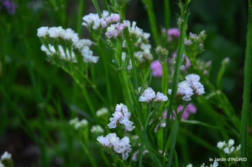 Fleurettes,Dordogne,jardin 175.JPG