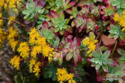 jardin (3 semaine de mars) 094.JPG