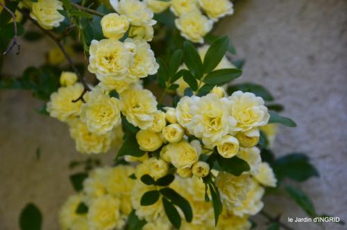 colline,orchidée,nature,jardin fleuri 023.JPG