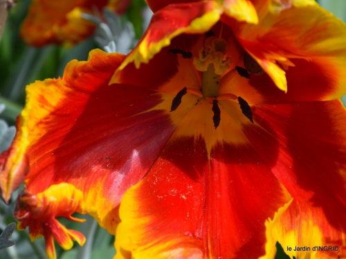 jardin printemps 002.JPG