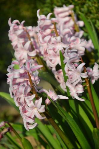 roseraie,fleurettes 005.JPG