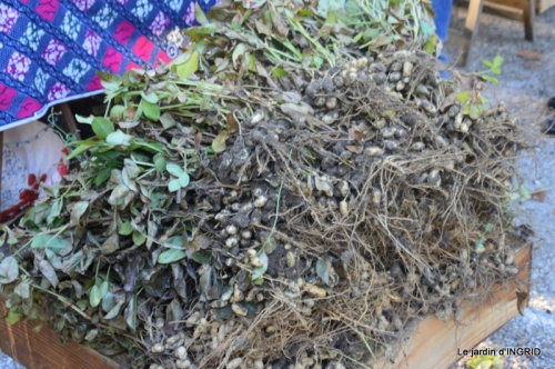 Issigeac,citrouilles ,rhus,automne,jardin 030.JPG