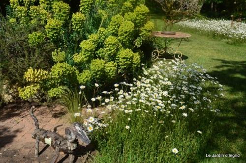 jardin avril et mai, 106.JPG