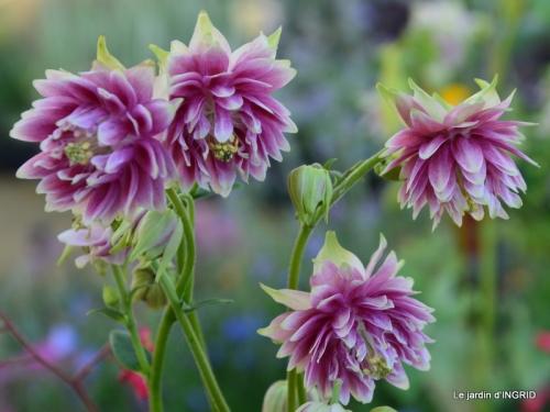coquelicots,fête des fleurs Lalinde,fouleix,jardinage 076.JPG
