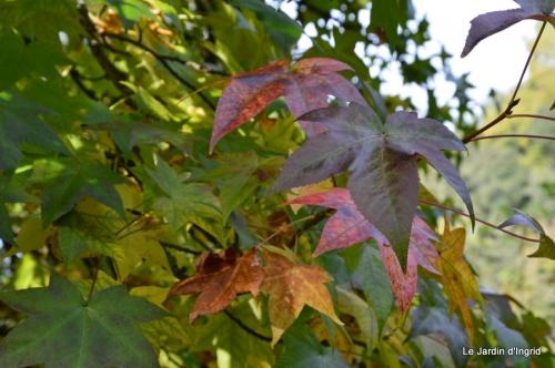 automne jardin,la rue,abeilles,les p filles 084.JPG